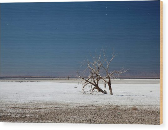 Dead Trees On Salt Flat Wood Print