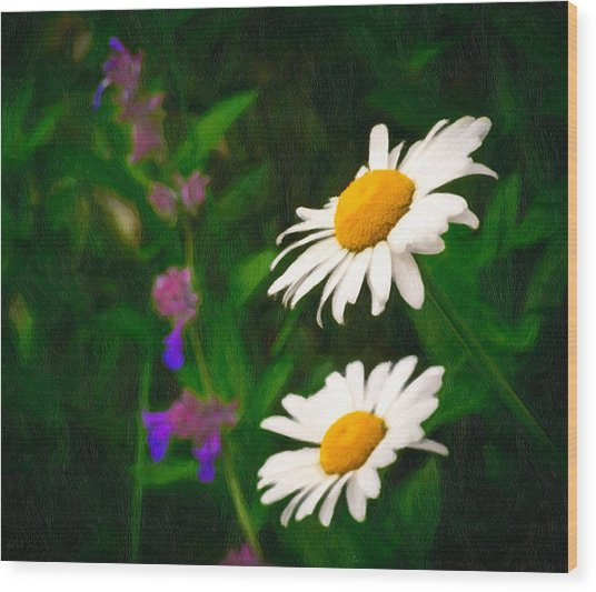 Dear Daisy Wood Print