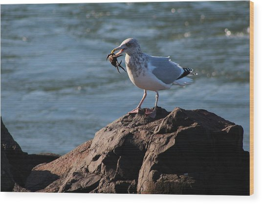 Death By Seagull Wood Print