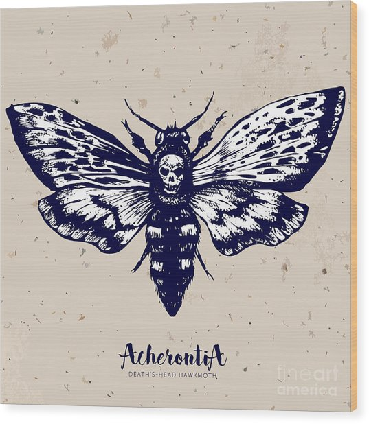 Deaths-head Hawkmoth. Hand Drawn Vector Wood Print