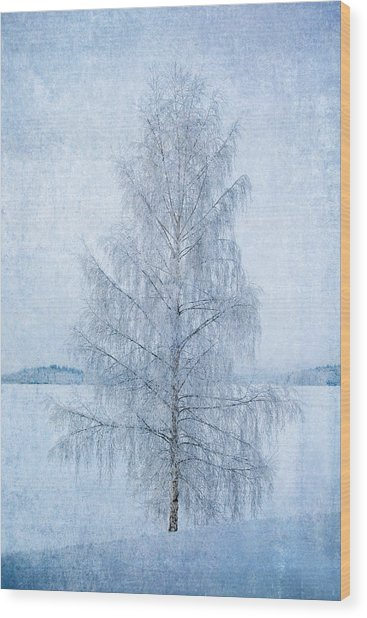 December Birch Wood Print