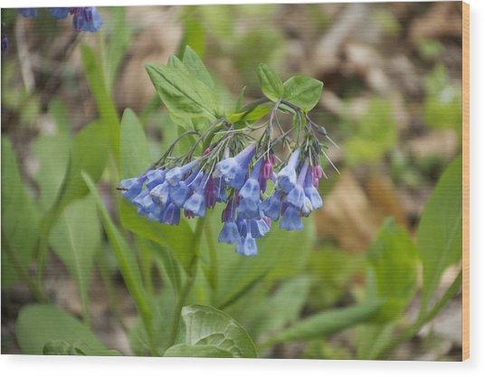 Deep Blue Wild Flowers At Mt Cuba Wood Print by Mark Holden