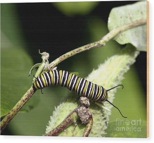Deep In The Green - A Caterpillars Life Wood Print