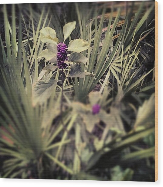 Deep Purple Berries Wood Print by Chasity Johnson