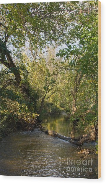 Deep Run Maryland Wood Print by Chris Scroggins