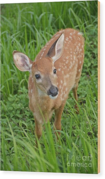 Deer 42 Wood Print