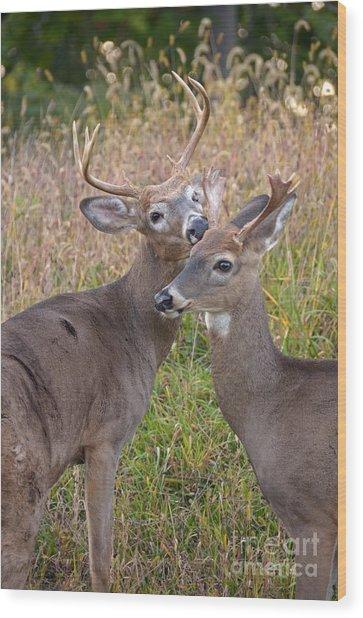 Deer 49 Wood Print