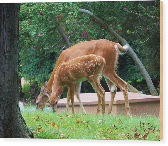 Deer And Fawn Wood Print by Adam L
