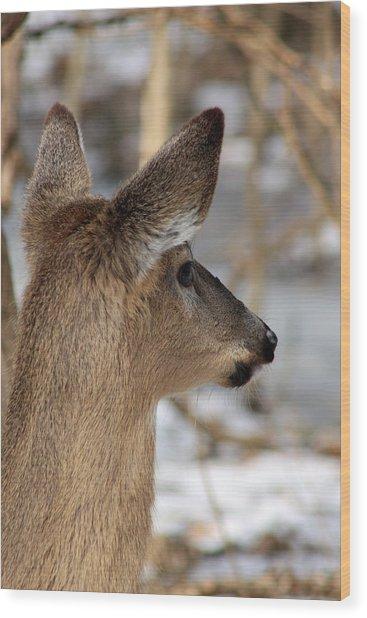 Deer Day Dreamer Wood Print