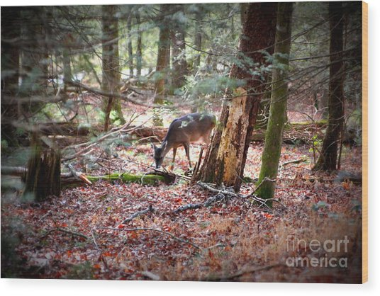 Deer Grazing Around The Loop Cades Cove Wood Print