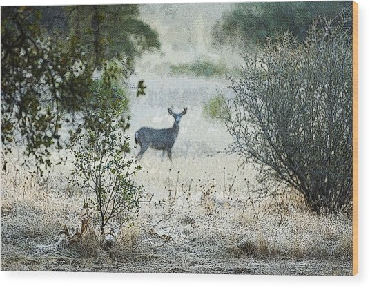 Wood Print featuring the photograph Deer In A Meadow by Sherri Meyer