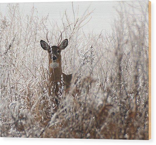 Deer In Winter Wood Print