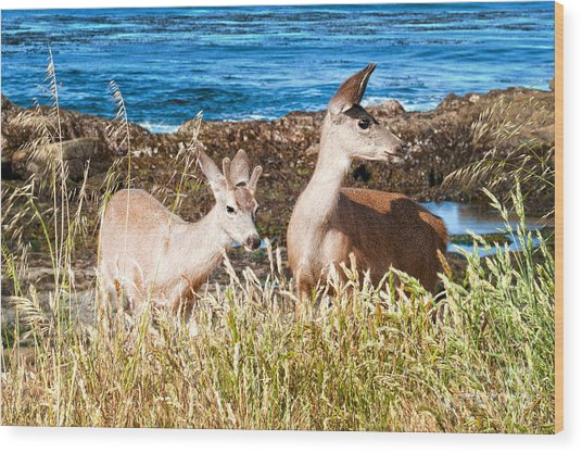 Deer On The Beach At Point Lobos Ca Wood Print by Artist and Photographer Laura Wrede