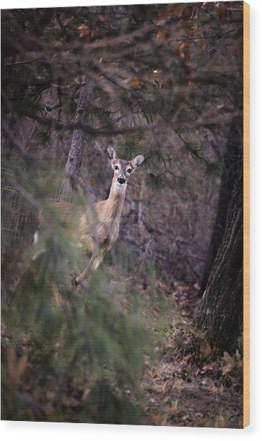 Deer's Stomping Grounds. Wood Print