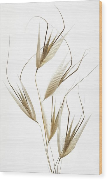 Delicacy Of Nature Wood Print by Shogun
