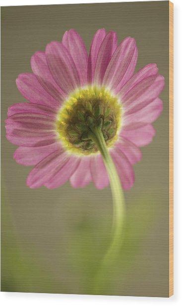 Delicate Daisy Wood Print