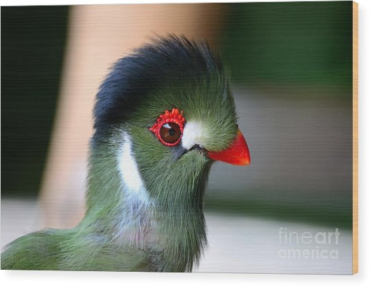 Delicate Green Turaco Bird With Red Beak White Patches And Black Crown Wood Print