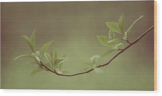 Delicate Leaves Wood Print