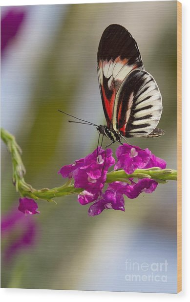 delicate Piano Key Butterfly Wood Print