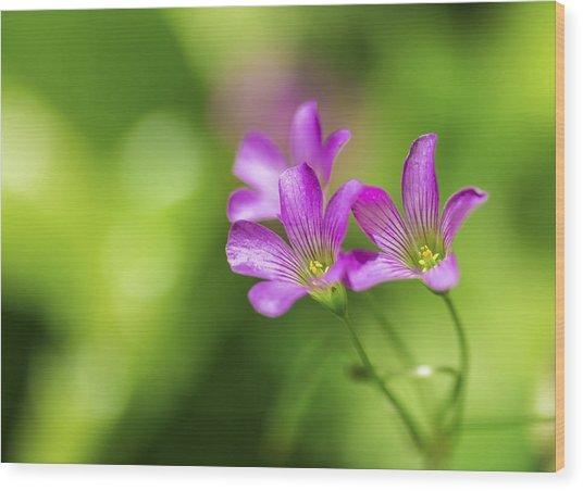 Delicate Purple Wildflowers Wood Print