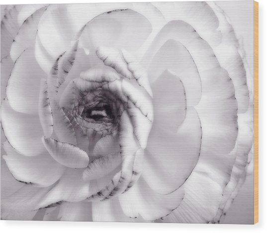 Delicate - White Rose Flower Photograph Wood Print