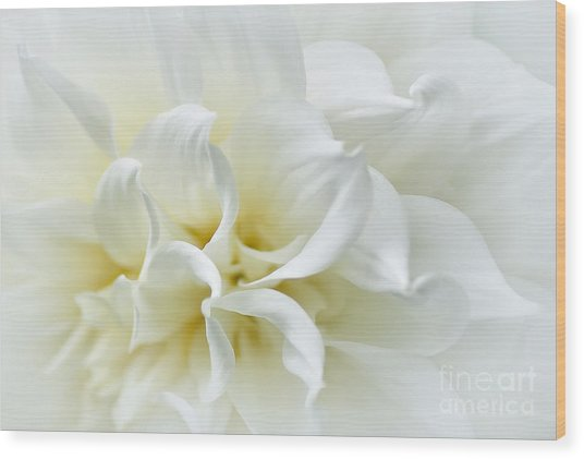 Delicate White Softness Wood Print