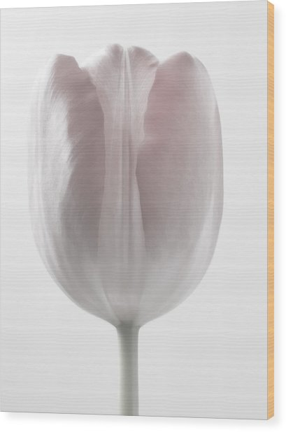 Close Up White Flowers Macro Photography Art Wood Print