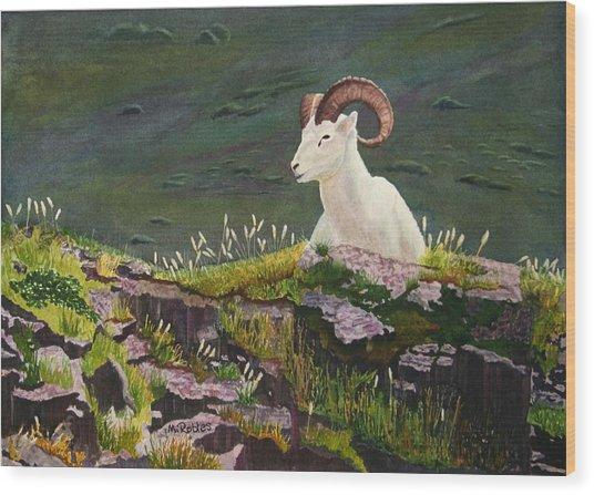 Denali Dall Sheep Wood Print