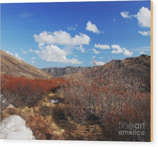 Denali Tundra Wood Print by Mel Steinhauer