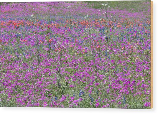 Dense Phlox And Other Wildflowers Wood Print