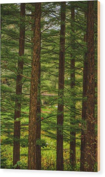 Density Wood Print by Kathi Isserman