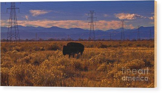Denver Bison Wood Print