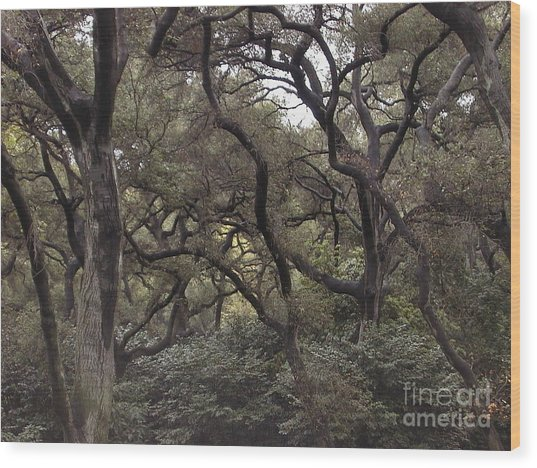 Descanso Oaks 3 Wood Print