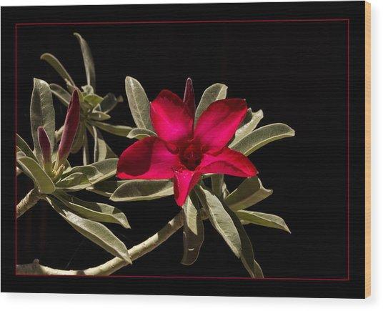 Desert Azalea Wood Print