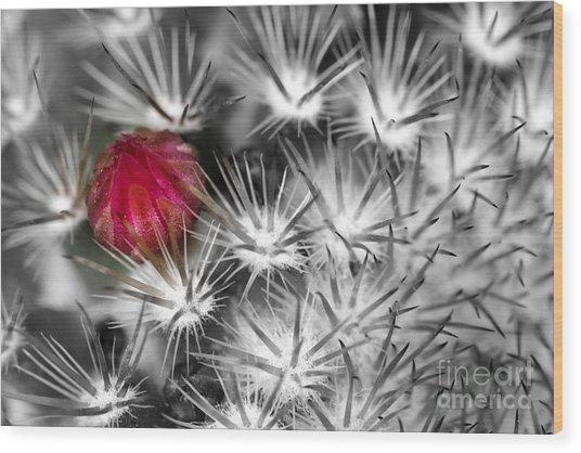 Desert Bloom Bw Wood Print