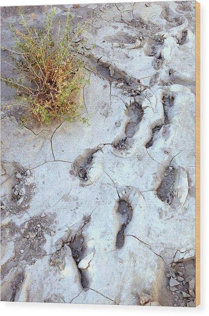 Desert Footprints Wood Print