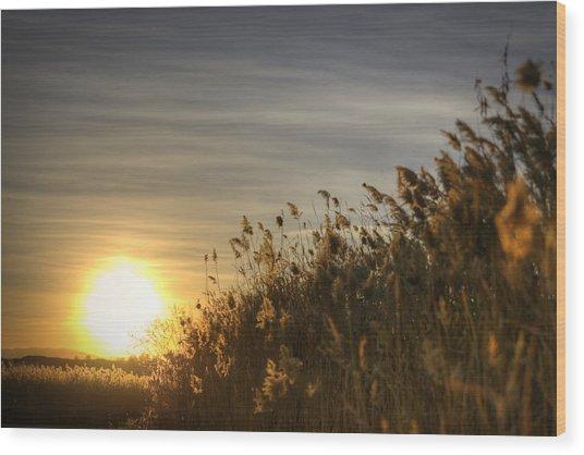 Desert Grain Wood Print