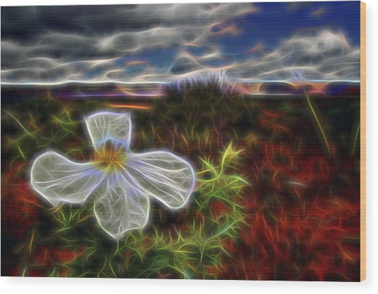 Desert Primrose 1 Wood Print