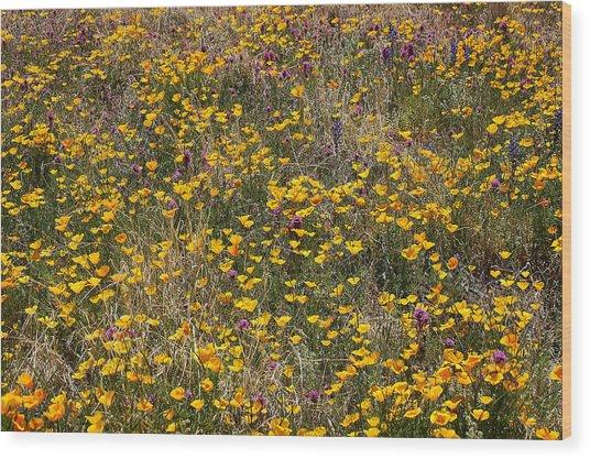 Desert Wildflowers Wood Print by Robert Ashbaugh