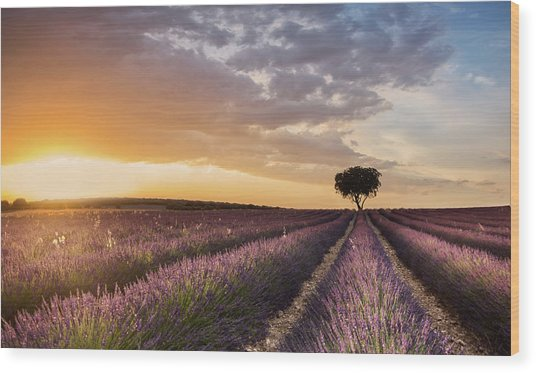 Destination Lavender Wood Print