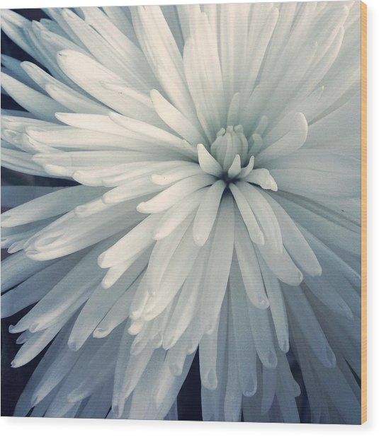 Detail Shot Of Cropped White Flower Wood Print by Valerie Locante / Eyeem