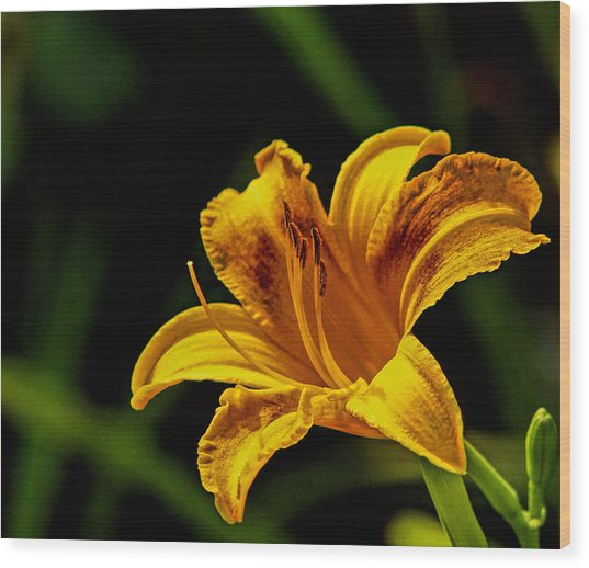 Detailed Lily Wood Print by Dave Bosse