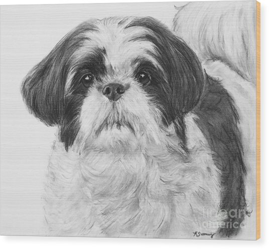 Detailed Shih Tzu Portrait Wood Print