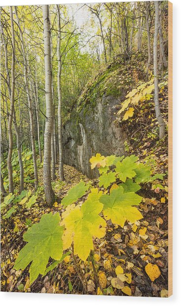 Devil's Club In Fall Wood Print