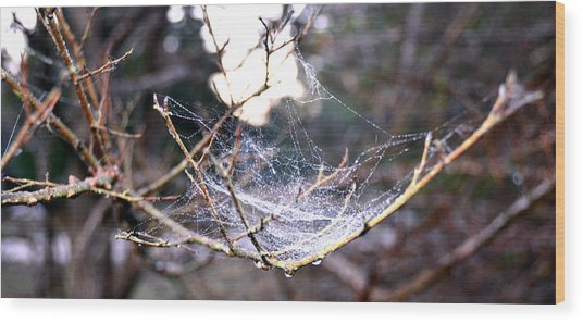 Dew Covered Spiderweb Wood Print by Julie Cameron