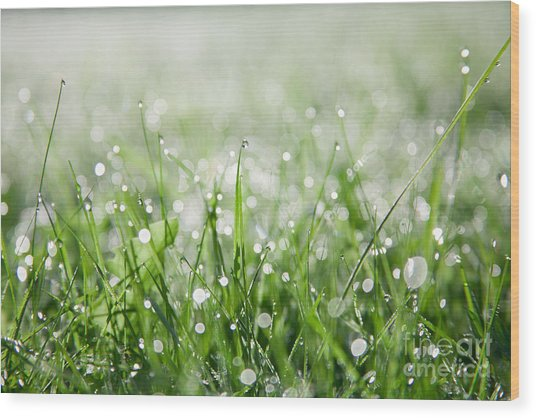 Dew Drenched Morning Wood Print