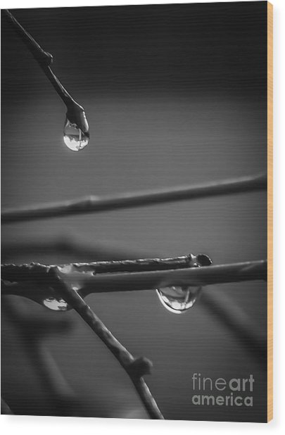 Dew Drops Wood Print