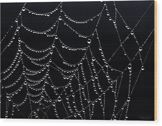 Dew Drops On Web 2 Wood Print