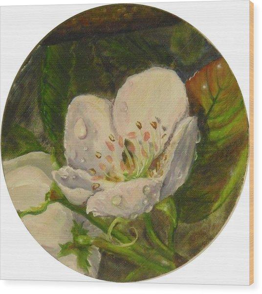 Dew Of Pear's Blooms Wood Print