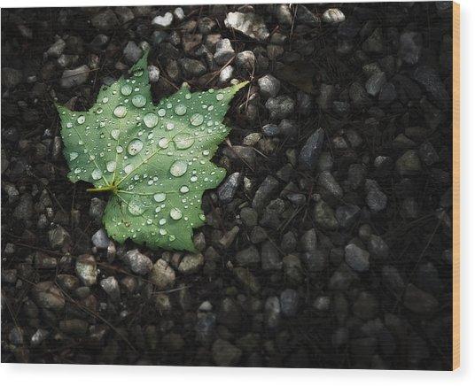 Dew On Leaf Wood Print